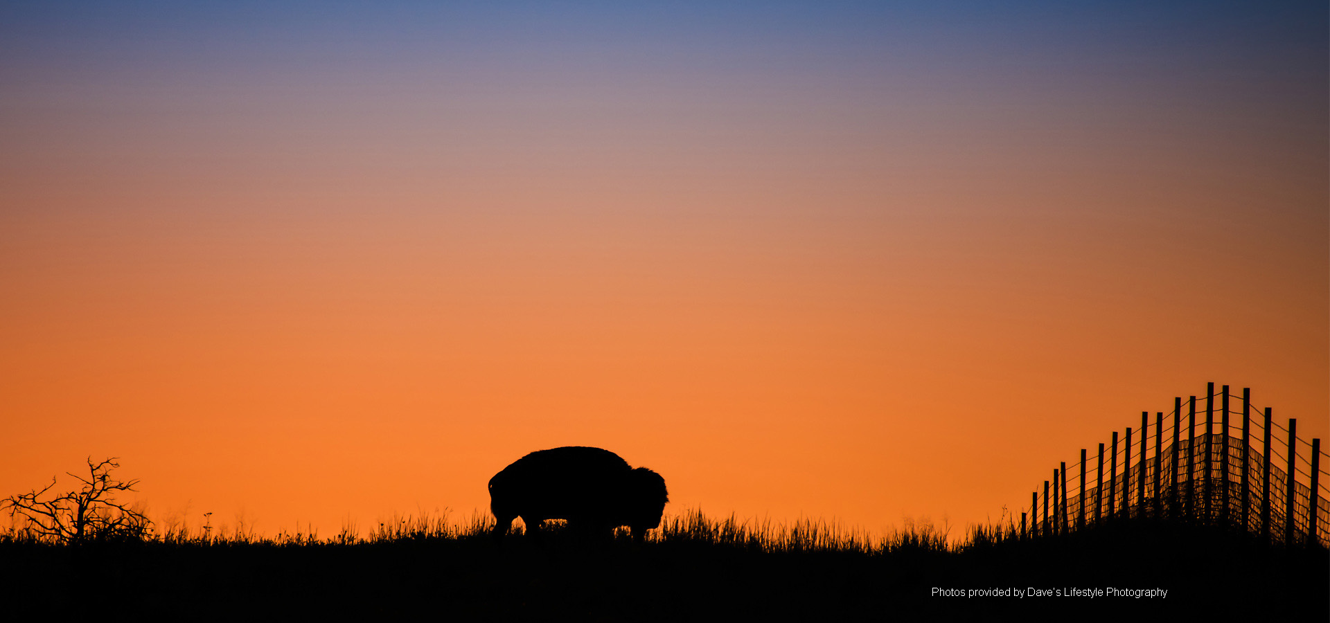 Buffalo Image by Dave's Lifestyle Photography